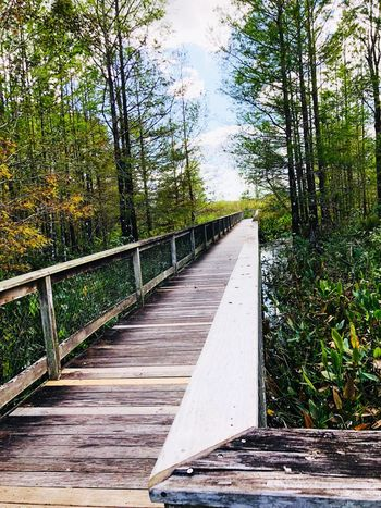 Walkway of natural beauty Tree Nature Forest Day Outdoors No People Wood - Material Beauty In Nature Tranquil Scene Footbridge Sky Scenics Bridge - Man Made Structure Tranquility The Way Forward