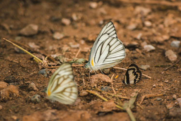Close-up of butterfly on land