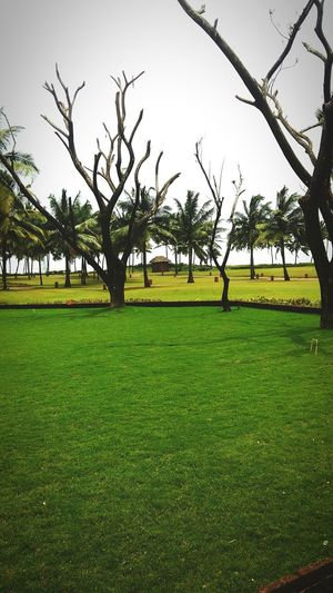 Garden Trees Lawn Nature Nature Makes Me Smile Nature Garden Nature Harmony Beautiful Naturelover