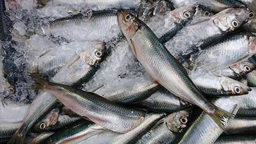 Seafood Large Group Of Animals Animal Themes Backgrounds No People Fish Market Large Group Of Objects Full Frame Day Outdoors Freshness Close-up Sea Life Catch Of Fish Herring Nature