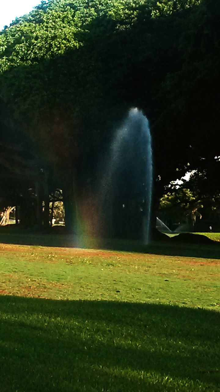 grass, tree, nature, sunlight, green color, beauty in nature, no people, outdoors, day, spraying, growth, water