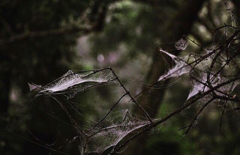 Web Animals In