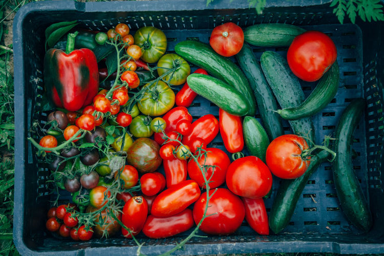 Vegetables in the basket Vegetable Food And Drink Healthy Eating Food Freshness Pepper Green Color Tomato Red Bell Pepper Organic Vegetarian Food Organic Food