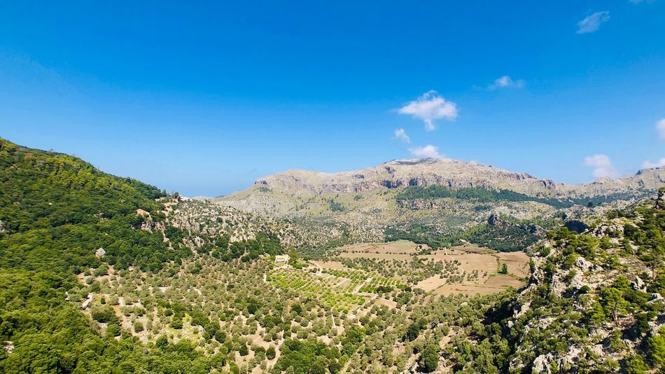 Mallorca EyeEm Selects Sky Plant Beauty In Nature Tranquility Blue Nature Growth Scenics - Nature Tree Land Tranquil Scene Landscape Mountain Day Copy Space Green Color Environment No People Cloud - Sky Sunlight