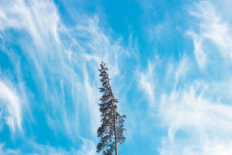 Beauty In Nature Blue Cloud - Sky Day Idyllic Nature No People Outdoors Plant Sky Tree White Color Winter