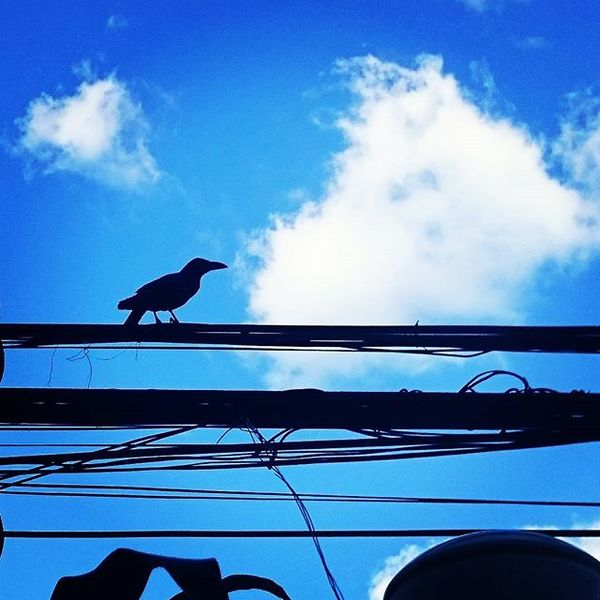 Crow Silhouette Clouds Sky Silhoutte Photography Living In The Concrete Jungle Bird
