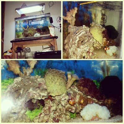 Aquarium Bedroom Fish Coral Lighting t(^_^)y