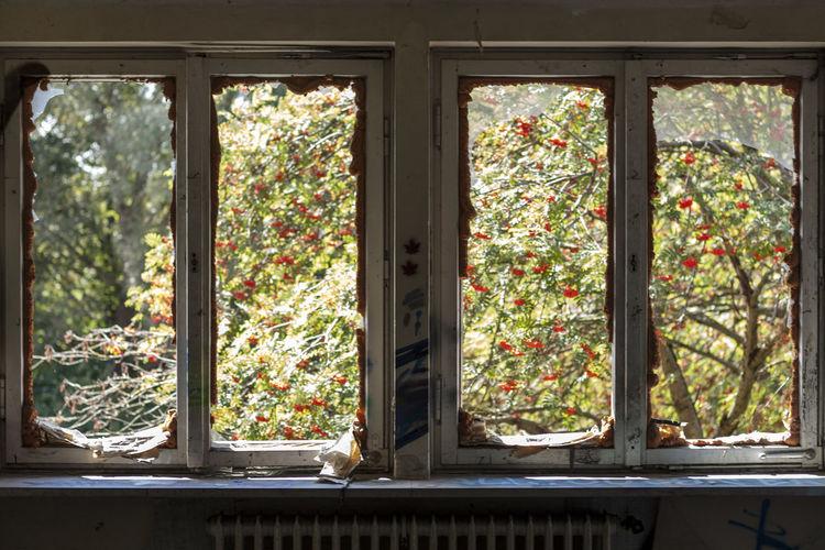 View of plants through window