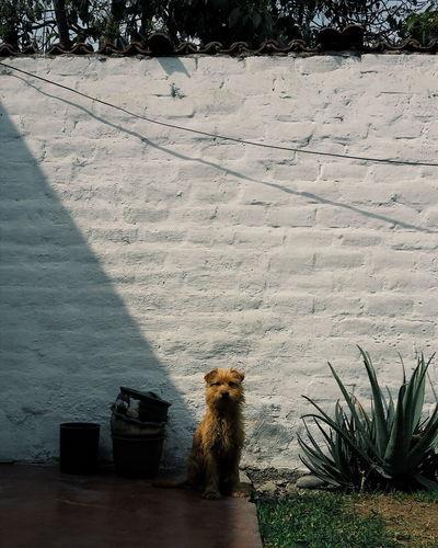 Scott. Pets Doggy AMPt Community Vscocam