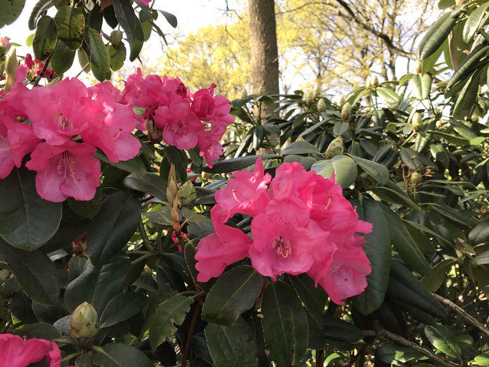 Close-up of pink flowering plant in park