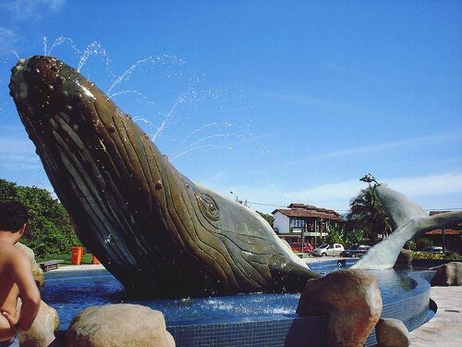 Praia da baleia lugar linda
