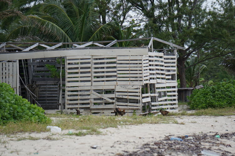 Beach Life Beach Building Exterior Day Grand Cayman No People Outdoors Shack