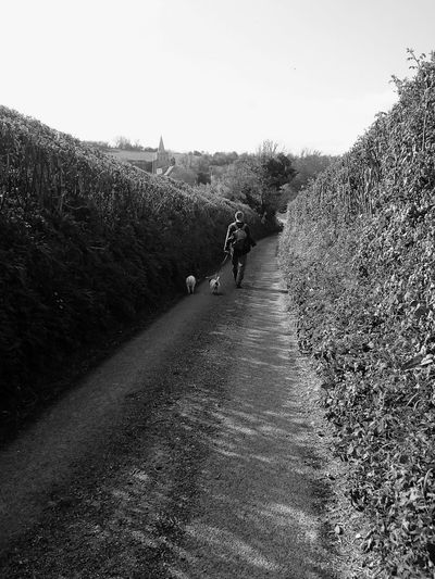 Outdoors Nature Walking Around Blackandwhite Photography Black & White Man Walking Alone Man Walking From Behind Countrylife Country Lane