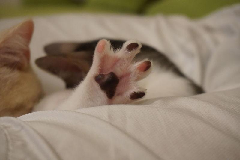 Pets Domestic Animals Lying Down Domestic Cat SonyAlpha6000 Sony A6000 Sony Neko Lovelovelove Photooftheday Gato Meow 貓咪的日常 貓 毛小孩 Kitten 喵 貓咪睡覺 喵星人 Cute Catoftheday Cat Domestic Life