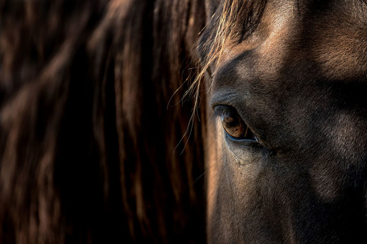 Close-up of a horse eye