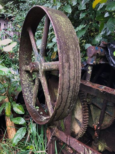 Relics from the past History Historical Machine Relic Stationary Farm Machinery Overgrown And Beautiful EyeEmNewHere Bygone Times Rusty Metal Gearing Flywheel Pulley Stationary Hay Press Day No People Outdoors Old Metal Nature Rusty Wheel Machinery Abandoned Machine Part Weathered
