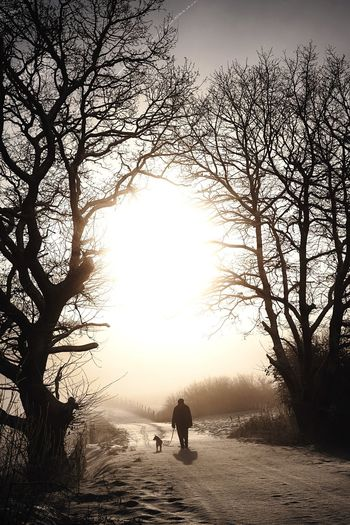 Silhouette person on bare tree against sky during winter