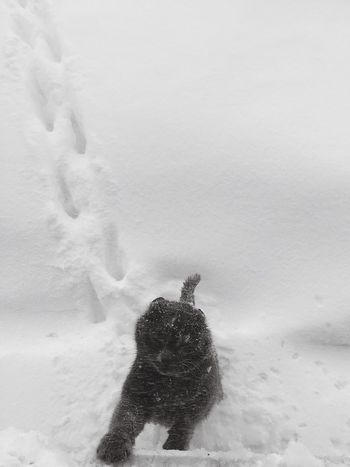 Snowy day❄️ Snow ❄ Snow Day Cat Izmir Blackandwhite
