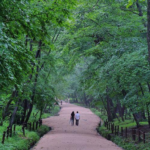 Robin_theme16 그 여름 Walking in the greenness 광릉