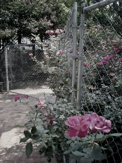 Caged beauty RAD Flor Beauty Nature