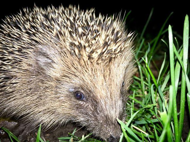 One Animal Animal Themes Animal Wildlife Grass Mammal