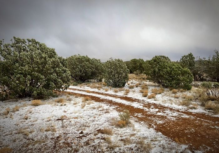 """Spring Snowstorm in The Juniper Forest"" Spring weather in the highlands of Central New Mexico is unpredictable. It can go from 75 degrees in the early afternoon to a snowstorm within hours. Nature Scenics Snow Snowstorm Springweather Juniper Trees Rural Dirt Road Newmexico Newmexicophotography Newmexicoskies"