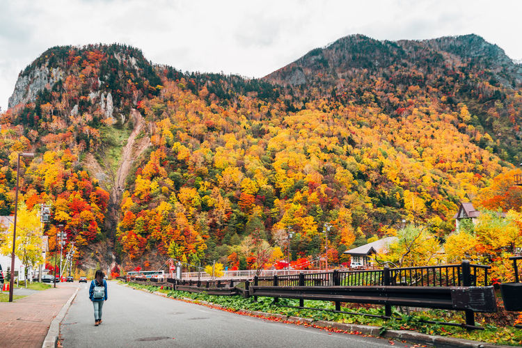 Daisetsuzan Autumn Change Plant Tree Beauty In Nature Nature Orange Color Day Mountain Transportation Sky Real People Scenics - Nature Outdoors Growth Full Length Road Men Leaf Plant Part Autumn Collection