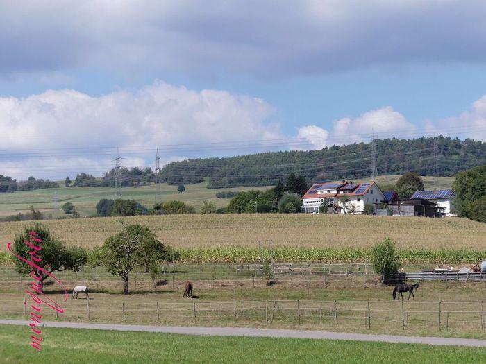 vorbei an der Pferdekoppel 💕💗 Monique52 Spazieren Und Fotografieren Enjoying Life Südschwarzwald Hochrhein Black Forest The Purist (no Edit, No Filter) Iphone6