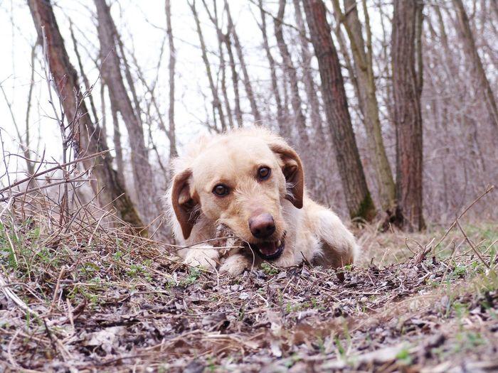 Pets Tree Portrait Dog Looking At Camera Retriever Sitting Grass Close-up