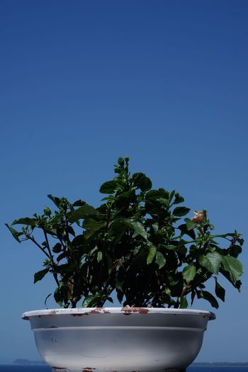 Low angle view of potted plant against blue sky