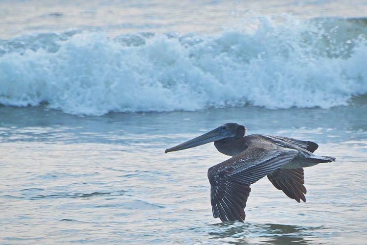 Bird Water Nature D5500 Beach