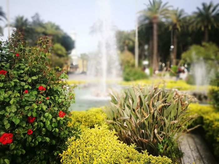 Fountain San Benedetto Del Tronto Marche Water Flower Front Or Back Yard Flowerbed Close-up Plant Watering