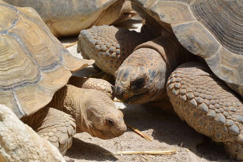 They are up to something... Turtle Animals Reptiles Wild Life