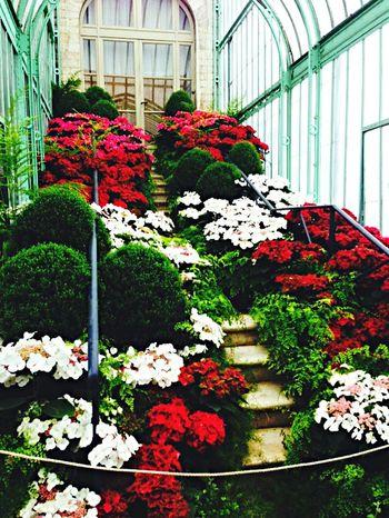 Serres De Laeken (Brussels). Scale  Flowers