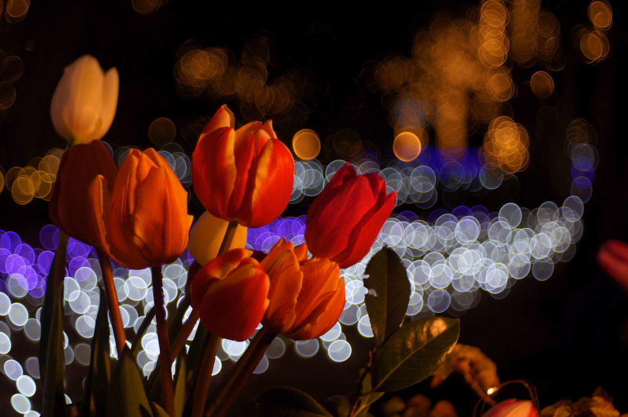 Close-Up Of Flowers Blooming At Night