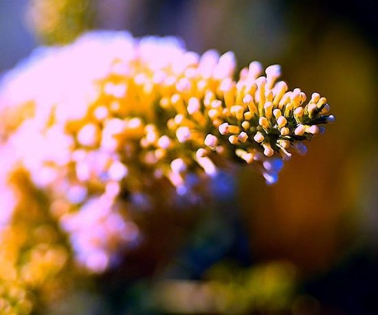 oh wow, this was wiggling like crazy with only a little wind. It looks neat, but what is it ? anybody know ? 1) Splendid_dof 2) 9vaga_flowersart9 3) Tv_depthoffield 4) Tv_flowers 5) Fotofanatics_flowers_ 6) Flowersandmacro 7) Macrophotography 8) Flowerphotography 9) Tgif_macro 0) Macroclique 1) Resourcemag 2) Macro_club 3) Macroworld_tr 4) Splendid_flowers 5) Ig_shotz 6) Ig_superb 7) Best_photogram 8) Fstoppers 9) 1001macro 0) Bns_macro 1) Best_macro 2) Flair_macro 3) Ig_macro 4) Macro_mood 5) Macro_holic 6) macro_sultans 7) my_daily_macro 8) macro_secrets 9) colors_ofourlives 0) pocket_dof
