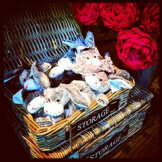 A basket full of donkeys! 🌱😍 Pretty Love Cute