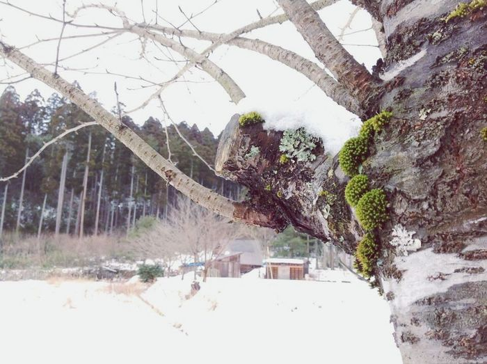 Winter Snow Cold Temperature Day Mountain Nature Tree Outdoors No People Beauty In Nature Sky Moss & Lichen Beauty In Nature IPhoneography