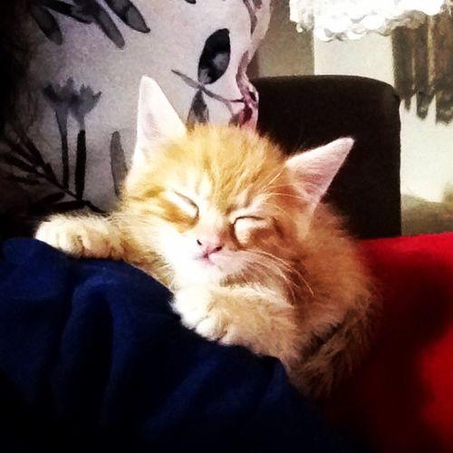 Uykucu şirin... Uykucuşirin Sleepingangel Cat Cats Catlover Instacat Igers Instagood Instalove Instamood Ilovemycat Kitten Bestoftheday Catoftheday Picoftheday Photooftheday