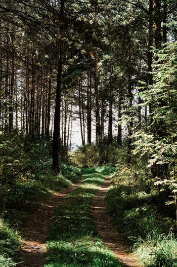 Beauty In Nature Day Direction Footpath Forest Green Color Growth Land Nature No People Non-urban Scene Outdoors Plant Sunlight The Way Forward Trail Tranquil Scene Tranquility Tree Trunk WoodLand