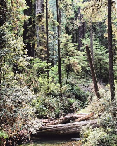 A walk in the woods. Nature Forest Pacific Northwest