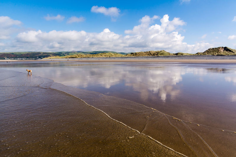 Scenes from Ynyslas Beach near Aberystwyth on August Bank Holiday 2016. Aberystwyth Beach Beach Photography Beautiful Scenery Blue Sky Cardigan Bay Clouds And Sky Dog Ocean Reflections In The Water Scenic Scenics Sea Seascape Seascape Photography Shoreline Tranquil Scene Wales Water Waves, Ocean, Nature Ynyslas