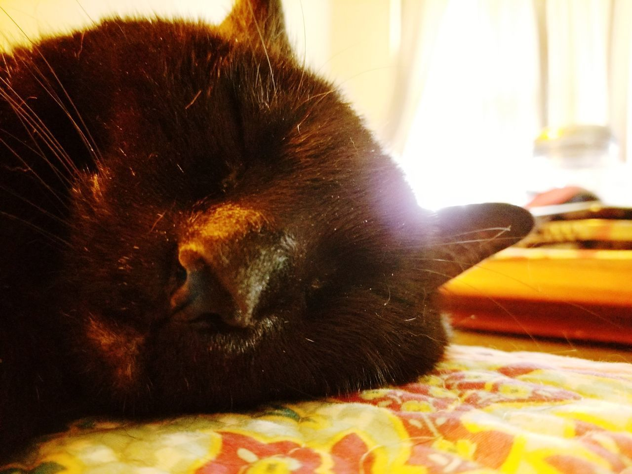 one animal, animal themes, domestic animals, pets, mammal, domestic cat, close-up, no people, indoors, feline, relaxation, day
