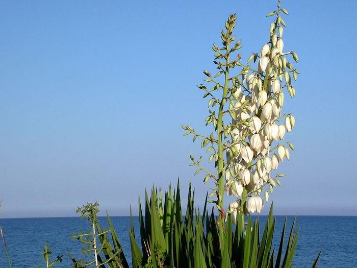 070707 Anamur Beauty In Nature Galpay Mamure Mediterranean Sea Outdoors Scenics Sea