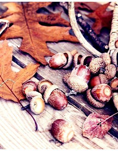 aspettando l'autunno.... Autunno🍁🍁🍁 Autumn colors Castagne Foglieautunnali Backgrounds Close-up