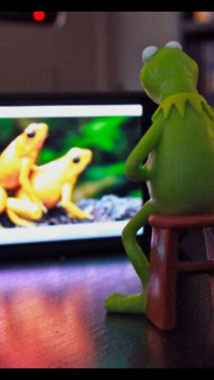 Check This Out Frog Perspective Hanging Out Popular Photos
