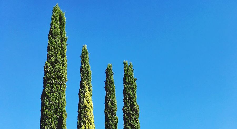 Blue Clear Sky Low Angle View Growth Copy Space Nature Tranquility No People Beauty In Nature Tranquil Scene Outdoors Tree Day Green Color Plant Cactus Sky Scenics Traveling Home For The Holidays