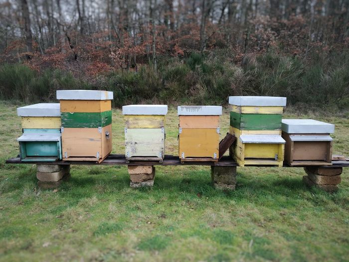 Houses of bees in countryside, are located on green field ,healthy honey, organic farm, beekeeping.