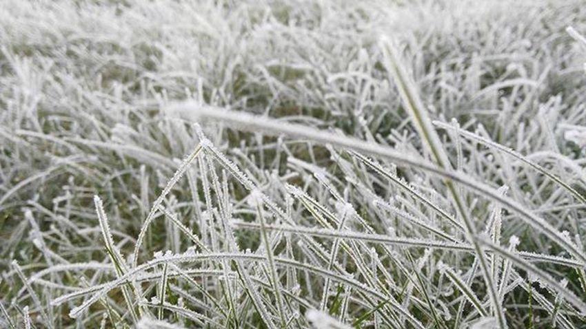 Ireland in spring Season  Frozen White Garden Iceage Instapic Grass Instapic Instadaily Instapixture Indtacool Instagram Igerireland Iger_ireland Macroom Ireland Island Picoftheday Huawei Wintergrafias