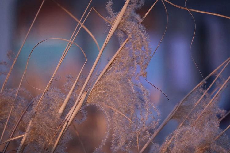 winter flowers UnderSea Full Frame Close-up Jellyfish Floating In Water Tentacle Aquarium Octopus Sea Anemone Clown Fish Mollusk Squid Fish Market Sea Life Underwater Invertebrate Star Field Galaxy Vapor Trail Astronomy Spiral Galaxy Foundry Space And Astronomy Light Painting Star Trail